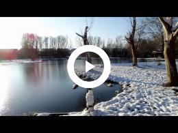 winterwandeling_met_griekse_adoptiehond_ozzie_spijkenisse_2014