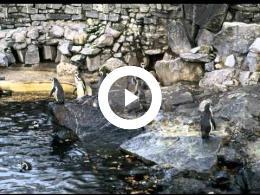 noorderdierenpark