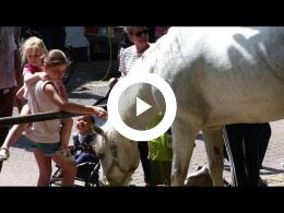 paardenmarkt_-_2e_pinksterdag_heenvliet_2017