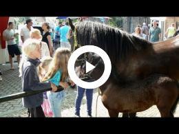 paardenmarkt_-_deel_2_-_2e_pinksterdag_heenvliet_2014