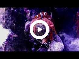 zoutwater_aquarium_sjoerd_bekkema_spijkenisse_2017
