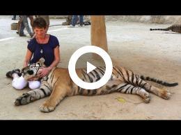 thailand_-_11_-_tiger_temple_-_kanchanaburi_-_wat_pha_luang_ta_bua_2011