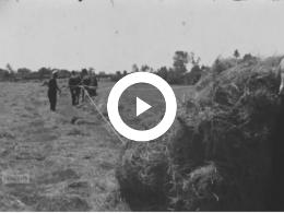 Keyframe of Restmateriaal Het Friese Paard 1942-1947, 1942-1947