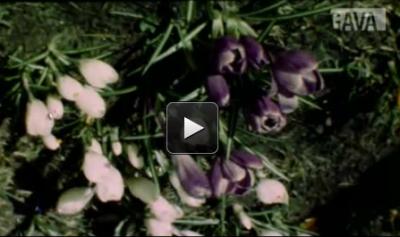 Bloemenfilm - Levie